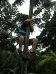 Climbing the Kentia Palms